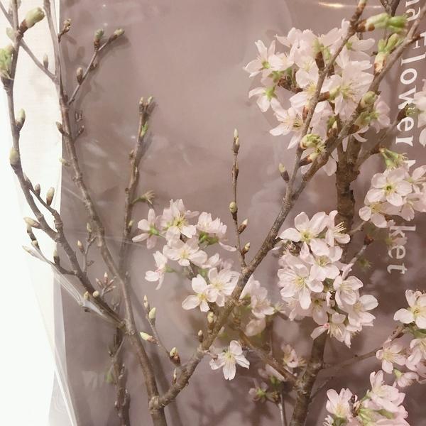 【今泉の美容室miroa】ピンクバイオレットで春先取りカラー✨を🌸