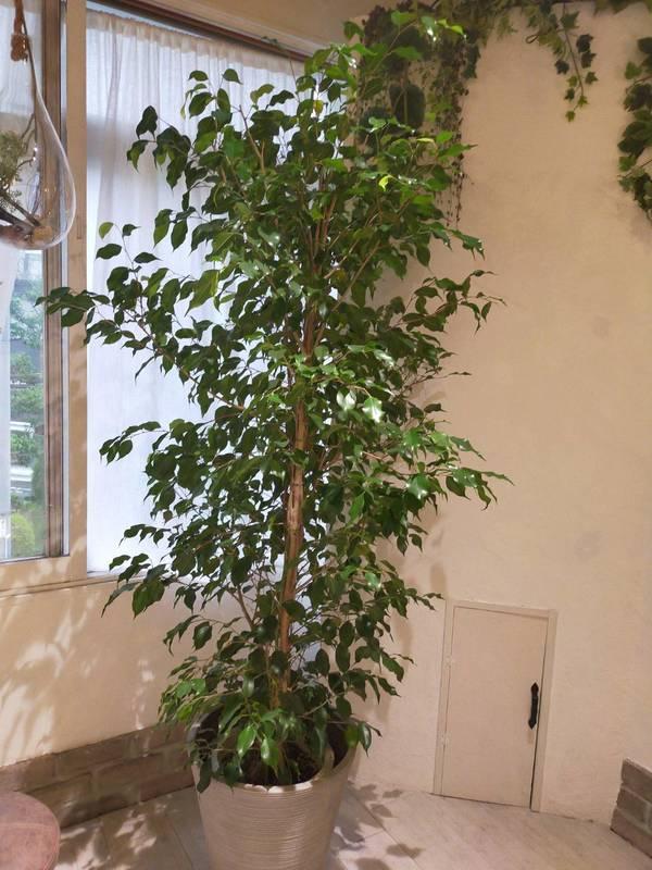 癒しの空間の作り方✴︎観葉植物の効果🌵